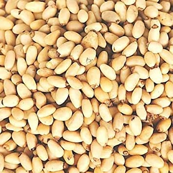 Pine Nuts - Bulk Pine Nuts 10 Pound Value Box - Freshest and highest  quality nuts from US