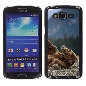 YiPhone /// Prima de resorte delgada de la cubierta del caso de Shell Armor - Divertido oso grizzly - Samsung Galaxy Grand 2