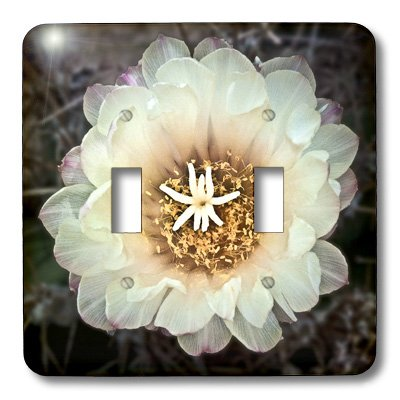 3dRose lsp_32378_2 Decorative Colorful Garden Botanic Classic Plant Sw Southwest Desert Cactus White Gold Flower Double Toggle Switch by 3dRose