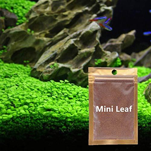Wpmlady 2 Pack Aquarium Grass Plants Seeds (Small Leaf Grass)