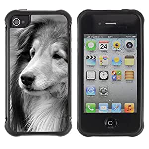 ZETECH CASES / Apple Iphone 4 / 4S / COLLIE SHETLAND SHEEPDOG LONGHAIR DOG / collie shetland perro pastor de pelo largo perro / Robusto Caso Carcaso Billetera Shell Armor Funda Case Cover Slim Armor