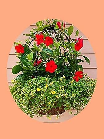 Le encantará este cesta de Topiary marco, de accesorios para ...