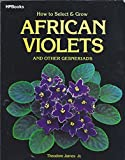 How to Select and Grow African Violets and Other Gesneriads