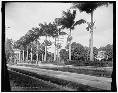 Vintography 24 x 30 Giclee Unframed Photo Royal Palms Port Spain Trinidad W I 1901 Detriot Publishing co. 22a by Vintography