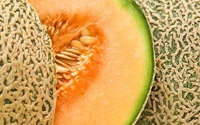 Ball 2076 Hybrid - Cantaloupe Seeds