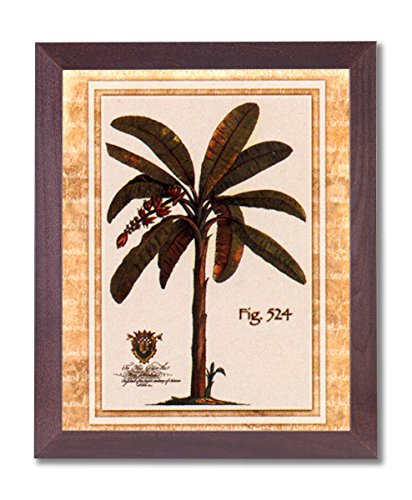 Framed Cherry Tropical Palm Tree Fig 524 Pictures Art Print