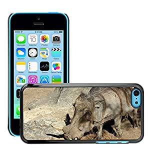 Hot Style Cell Phone PC Hard Case Cover // M00108798 Warthog Zoo Animal Wildlife Wild // Apple iPhone 5C