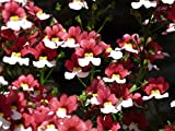 Home Comforts Peel-n-Stick Poster of Red Bloom Nemesia Strumosa White Blossom Flower Poster 24x16 Adhesive Sticker Poster Print
