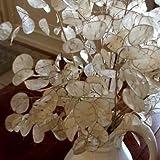 Money Plant White Flower Seeds (Lunaria Biennis) 50+Seeds