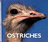 Ostriches, Thane Maynard, 1567662749