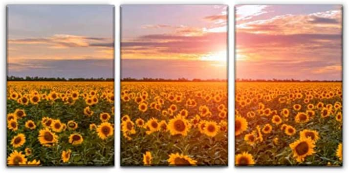 Amazon Com Gracelapin Canvas Wall Art Decor Summer Landscape Beauty Sunset Over Sunflowers Field Sunflower Printed Oil Painting Home Decoration 3 Panels Posters Prints