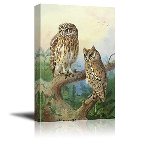 Beautifully Drawn Owls Resting on a Tree Branch