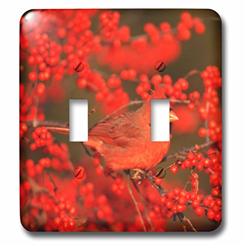 3dRose Danita Delimont - Cardinal - Northern Cardinal male in Common Winterberry Marion, IL - Light Switch Covers - double toggle switch (lsp_250893_2)