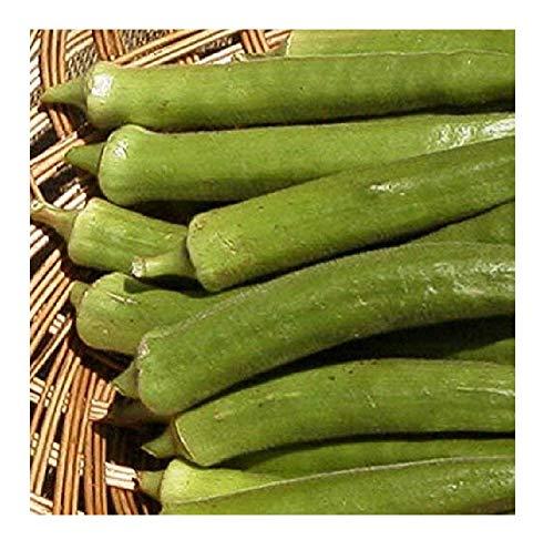 Emerald Seed - David's Garden Seeds Okra Emerald Green Velvet 6911 (Green) 100 Non-GMO, Heirloom Seeds