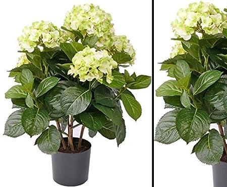 Fiori Gialli Gardenia.Ortensia Con Fiori Gialli In Vaso Altezza 55 Cm Kunsb Lumen