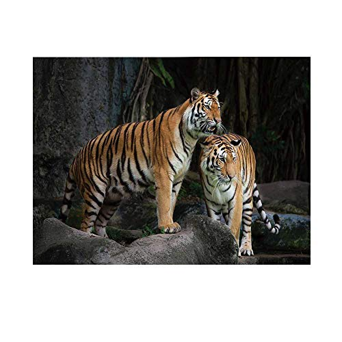 Wildcats Printed Towel - Animal Decor Photography Background,Tiger Couple in The Jungle on Big Rocks Wild Cats in Nature Print Backdrop for Studio,20x10ft