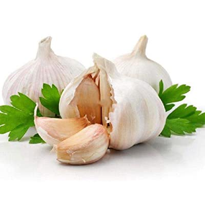 Vpicuo 100pcs/ Bag Giant Garlic Seeds Garden Organic Vegetable Plant Vegetables : Garden & Outdoor