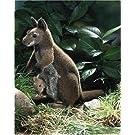 カンガルー親子 KOSEN(ケーセン社) 32cm Kangaroo with Baby/ぬいぐるみ