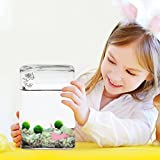 "Luffy Pet Plant for All Ages -- 6 (0.5"") Nano Marimo Moss Balls - Friendly, Compact & Low Maintenance Aquatic Pet - Lifelong Friend - Ideal for children or adults with busy schedule or little space"