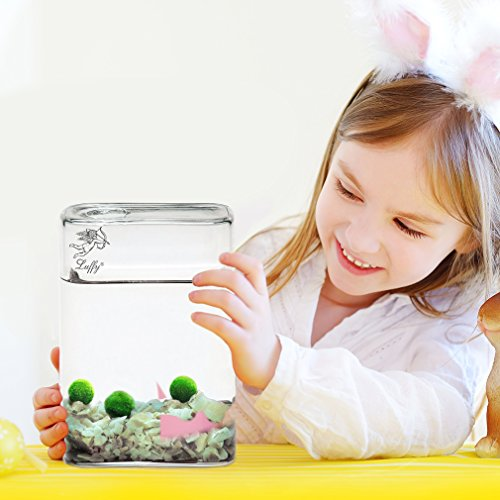 "Luffy Pet Plant for All Ages — 6 (0.5"") Nano Marimo Moss Balls – Friendly, Compact & Low Maintenance Aquatic Pet – Lifelong Friend – Ideal for children or adults with busy schedule or little space"