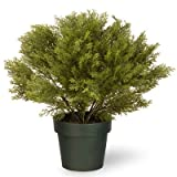 20-Inch Globe Juniper Tree with 8-Inch Round Plastic Pot For Sale