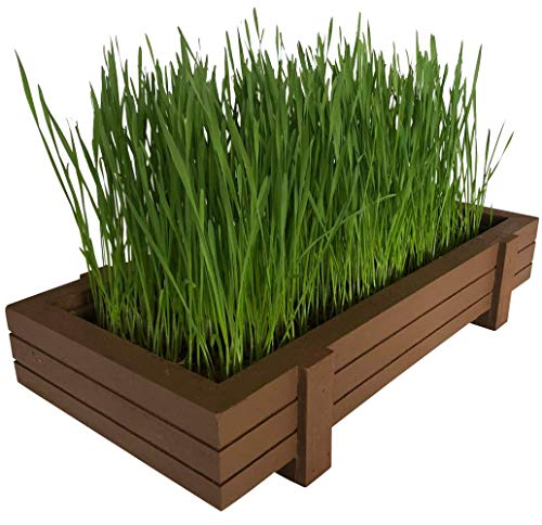 Certified Organic Wheatgrass Kit