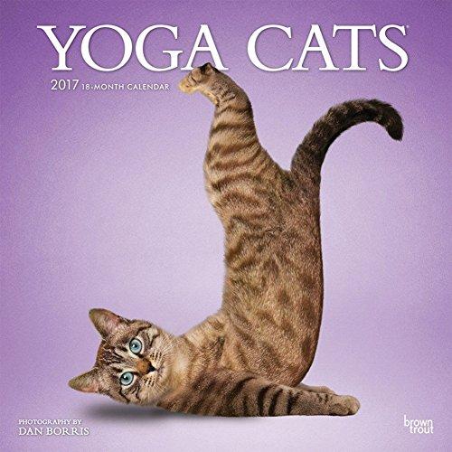 Hidden Axle (Yoga Cats - 2017 Calendar 12 x 12in)