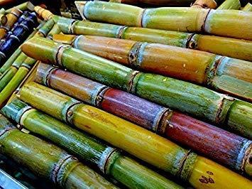 (Tara-garden SUGAR CANE THAI AKHA HEIRLOOM SEED VERY JUICY & SWEET RARE TROPICAL)