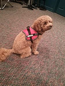 Official Service Dog Vest Small Red