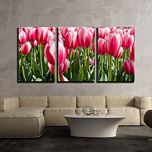 wall26 - 3 Piece Canvas Wall Art - Bright Colored Tulips on a Meadow in Spring - Modern Home Decor Stretched and Framed Ready to Hang - 16