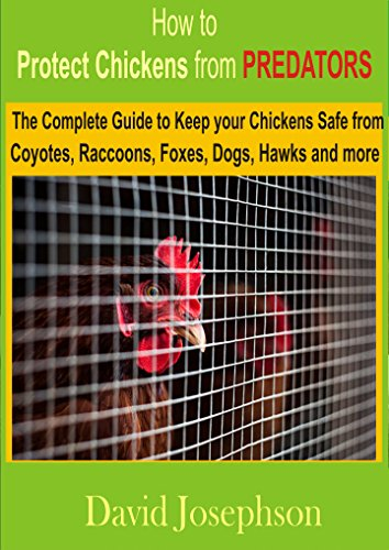 Protection Chicken - How to Protect Chickens from Predators: The Complete Guide to keep your Chickens Safe from Coyotes, Raccoons, Foxes, Dogs, Hawks and More