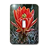 3dRose LLC lsp_32341_1 Decorative Colorful Garden Botanic Classic Plant Sw Southwest Desert Cactus Red Flower Single Toggle Switch