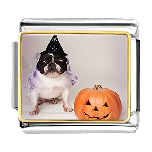 GiftJewelryShop Gold Plated bulldog witch costume Halloween pumpkin Bracelet Link Photo Italian Charms (Pugster Halloween Pumpkin)