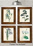 Blue Paris Botanicals Art Prints - Set of Four Prints (8x10) Unframed - Great for Bedroom/Bathroom Decor