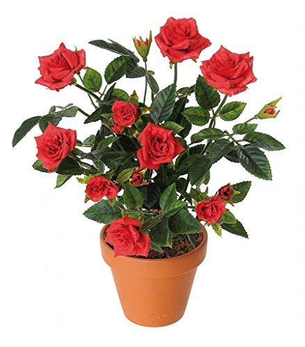 Bee Garden Red Rose Flower Seeds(Pack of 10)