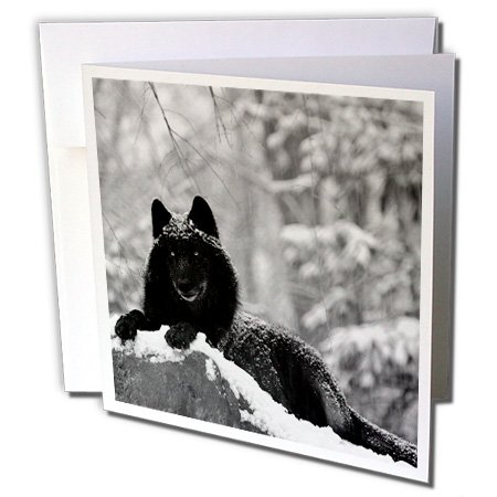 3dRose Rocky Mountain Wolf, Black White - Greeting Cards, 6 x 6 inches, set of 12 (gc_100280_2) (Mountain Rocky Paper)