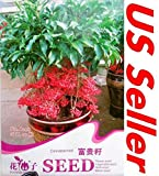 Plantree 10 Pcs Cinnabarroot Seeds B79, Ardisia Crenata Sims Rich Seeds Flower Us Seller