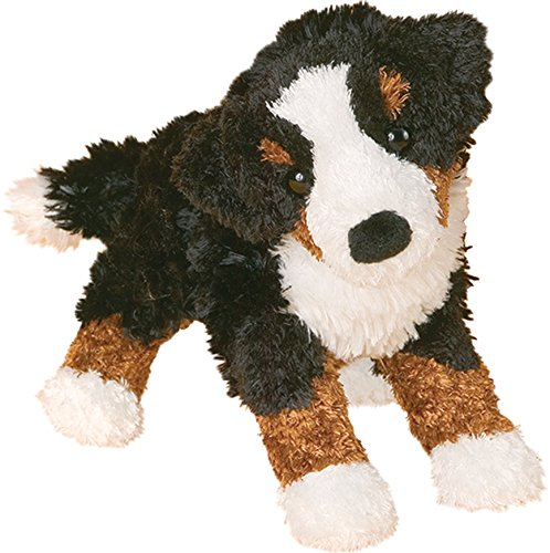 (Miranda Bernese Mountain Dog)
