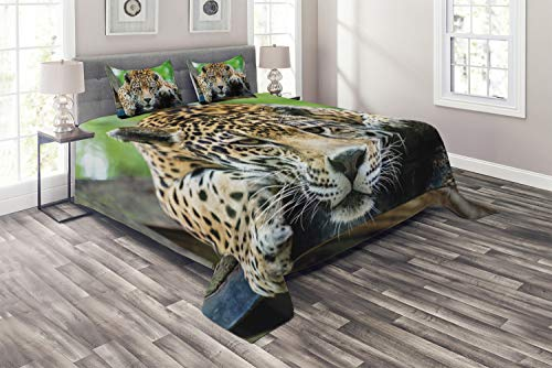 Ambesonne Jungle Coverlet, South American Jaguar Wild Animal Carnivore Endangered Feline Safari Image, 3 Piece Decorative Quilted Bedspread Set with 2 Pillow Shams, Queen Size, Orange Black ()