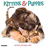Kittens & Puppies 2017 Wall Calendar