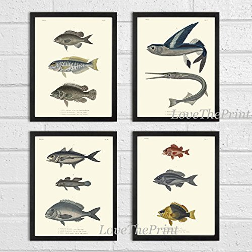 Fish Print Set of 4 Antique Beautiful Fish Illustration Natural Science Home Room Decor Wall Art Unframed HFP