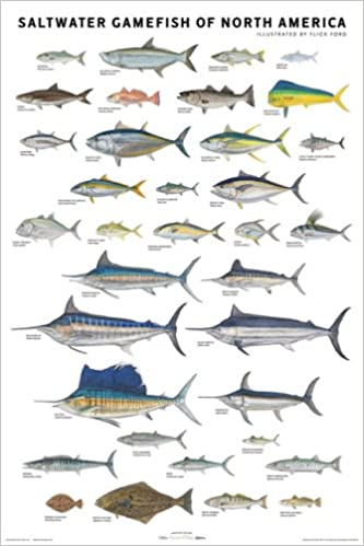 Saltwater gamefish of north america poster flick ford