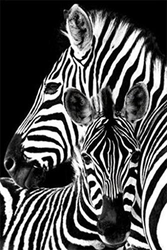Zebra- Poster 24 x 36in - Black Zebra Frame