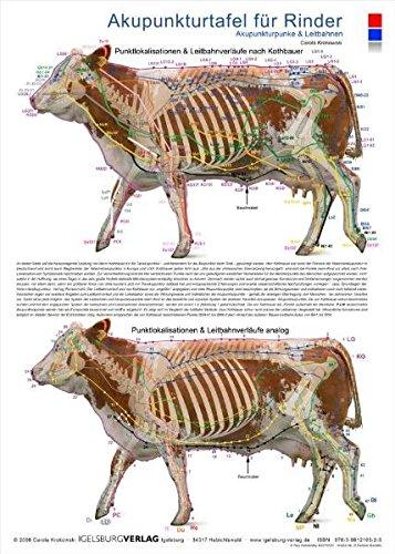 Akupunkturtafel für Rinder: Akupunkturpunkte und Leitbahnen