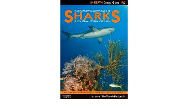 Sharks of Florida, The Bahamas, The Caribbean & The Gulf of Mexico