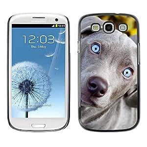 Be Good Phone Accessory // Dura Cáscara cubierta Protectora Caso Carcasa Funda de Protección para Samsung Galaxy S3 I9300 // Blue Weimaraner Vizsla Puppy Dog