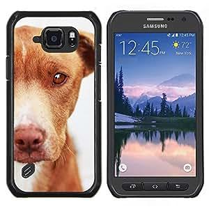 TECHCASE---Cubierta de la caja de protección para la piel dura ** Samsung Galaxy S6 Active G890A ** --Mutt Mestizo Marrón Canino
