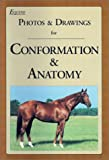 Equine Photos and Drawings for Conformation and Anatomy, Equine Research, Inc. Research Staff, 0935842136