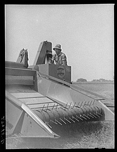 Historic Photos 1939 Photo Combine Harvester for Timothy Grass Seed. Jasper County, Iowa Location: Iowa, Jasper County
