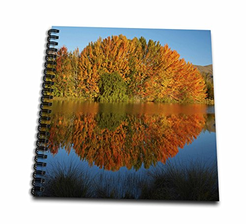 3dRose Danita Delimont - New zealand - Autumn trees reflect in Kellands Pond, South Island, New Zealand - Drawing Book 8 x 8 inch (db_257359_1)